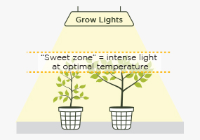 Optimizing Light Intensity