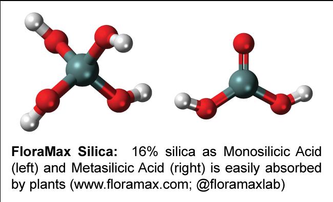 FloraMax Silica contains Monosilicic-Acid-and-Metasilicic-Acid